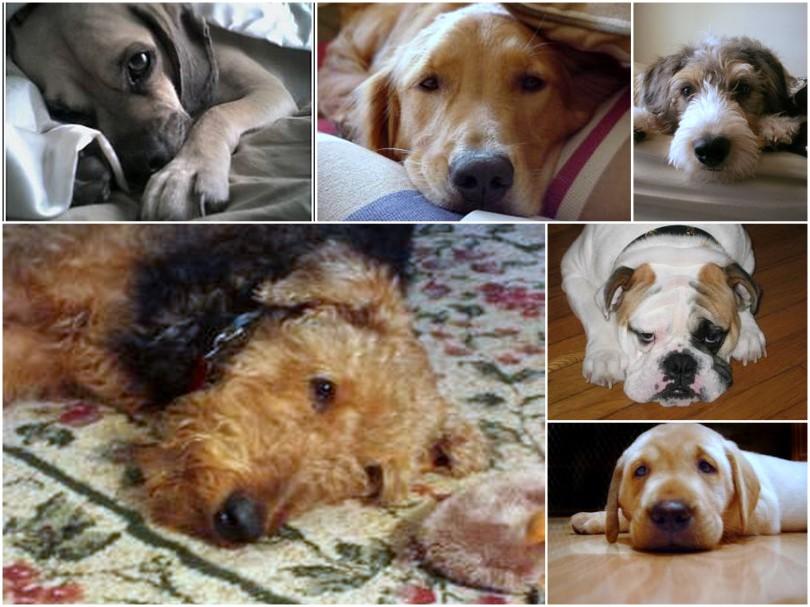 dogs named tucker3