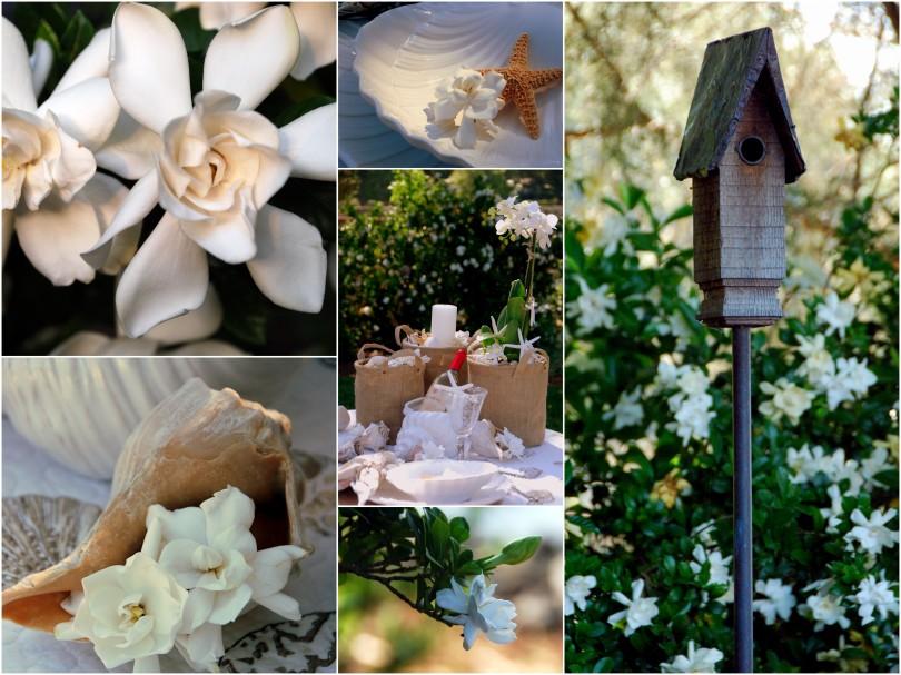 shells and gardenias_2