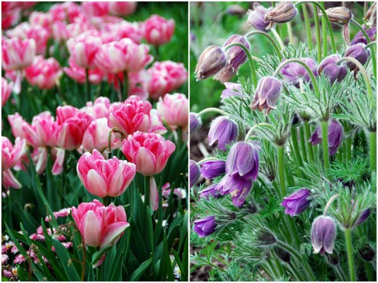 Victoria Buchart Gardens3