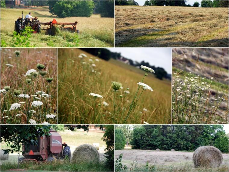 field mowed