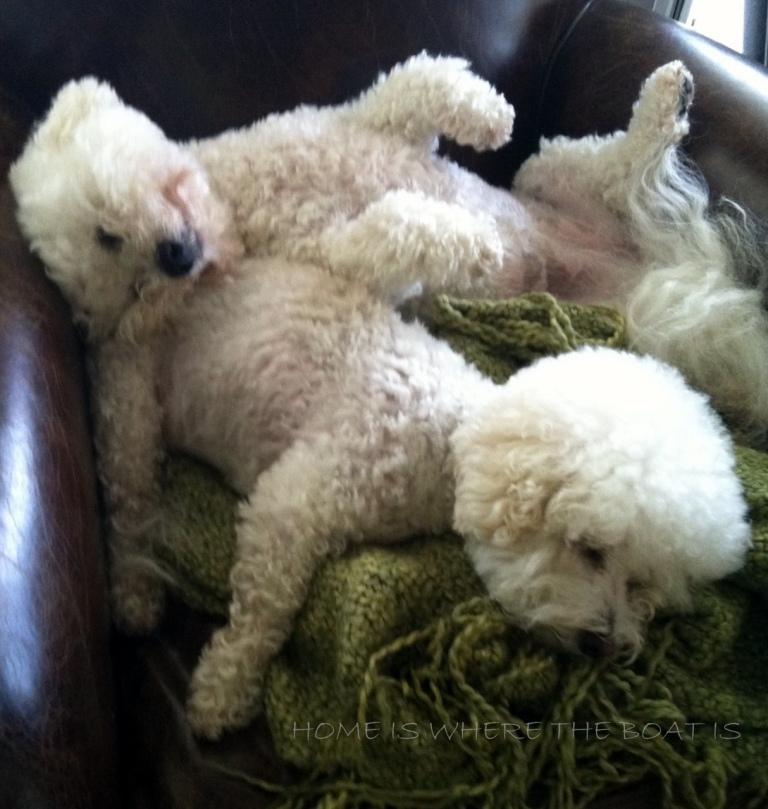 dogs sleeping2