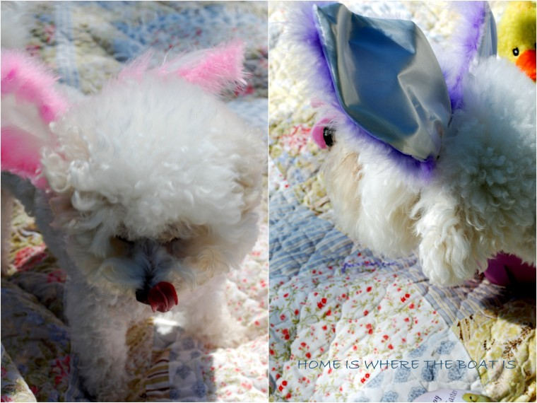 Chloe & Gracie Easter | homeiswheretheboatis.net #bichonfrise