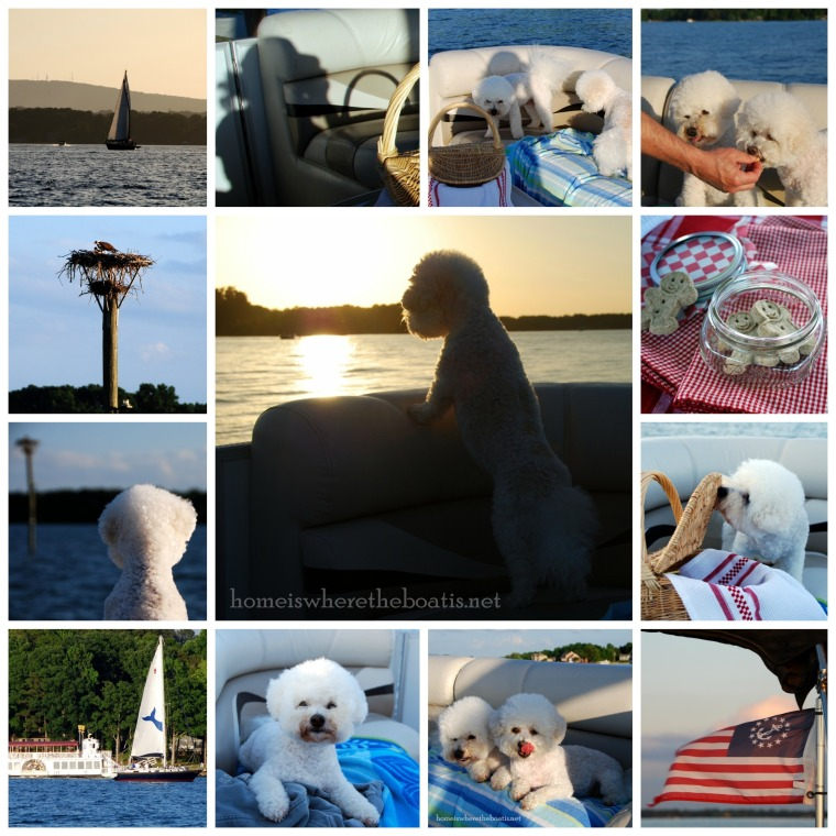 Boating with Dogs1-001