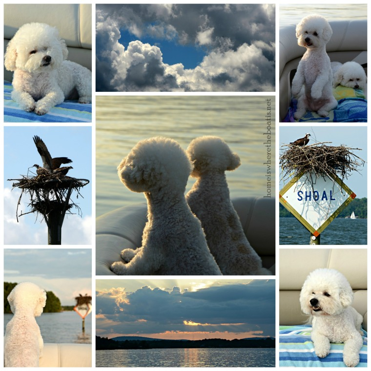 Boating with Dogs-001
