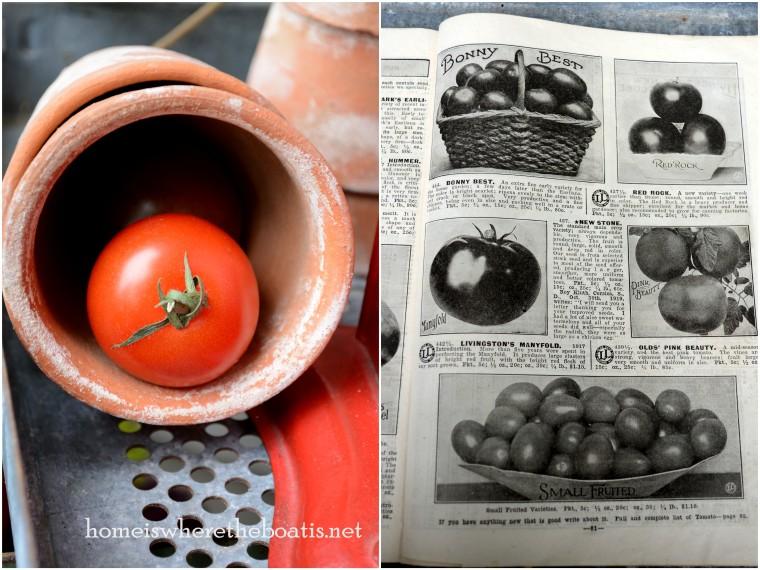 tomato seed catalog (2)