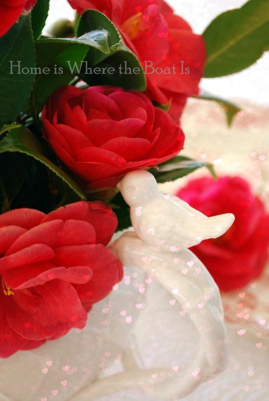 camellias pitcher