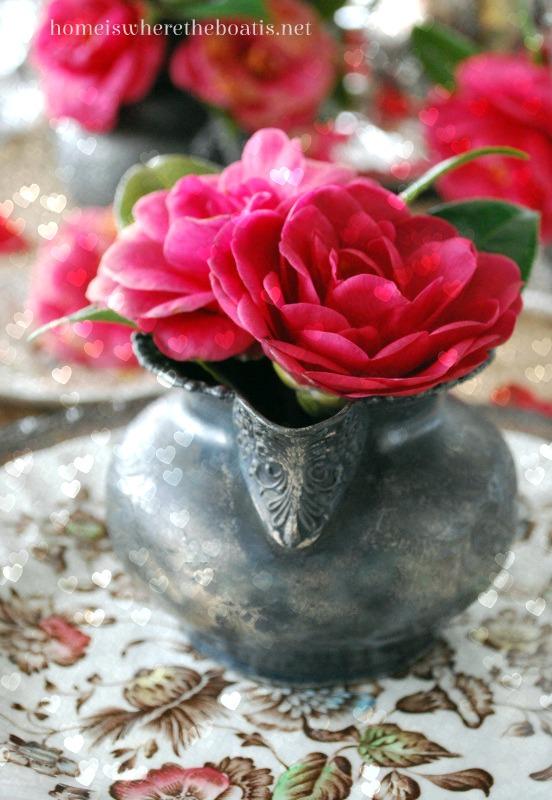 Camellias11