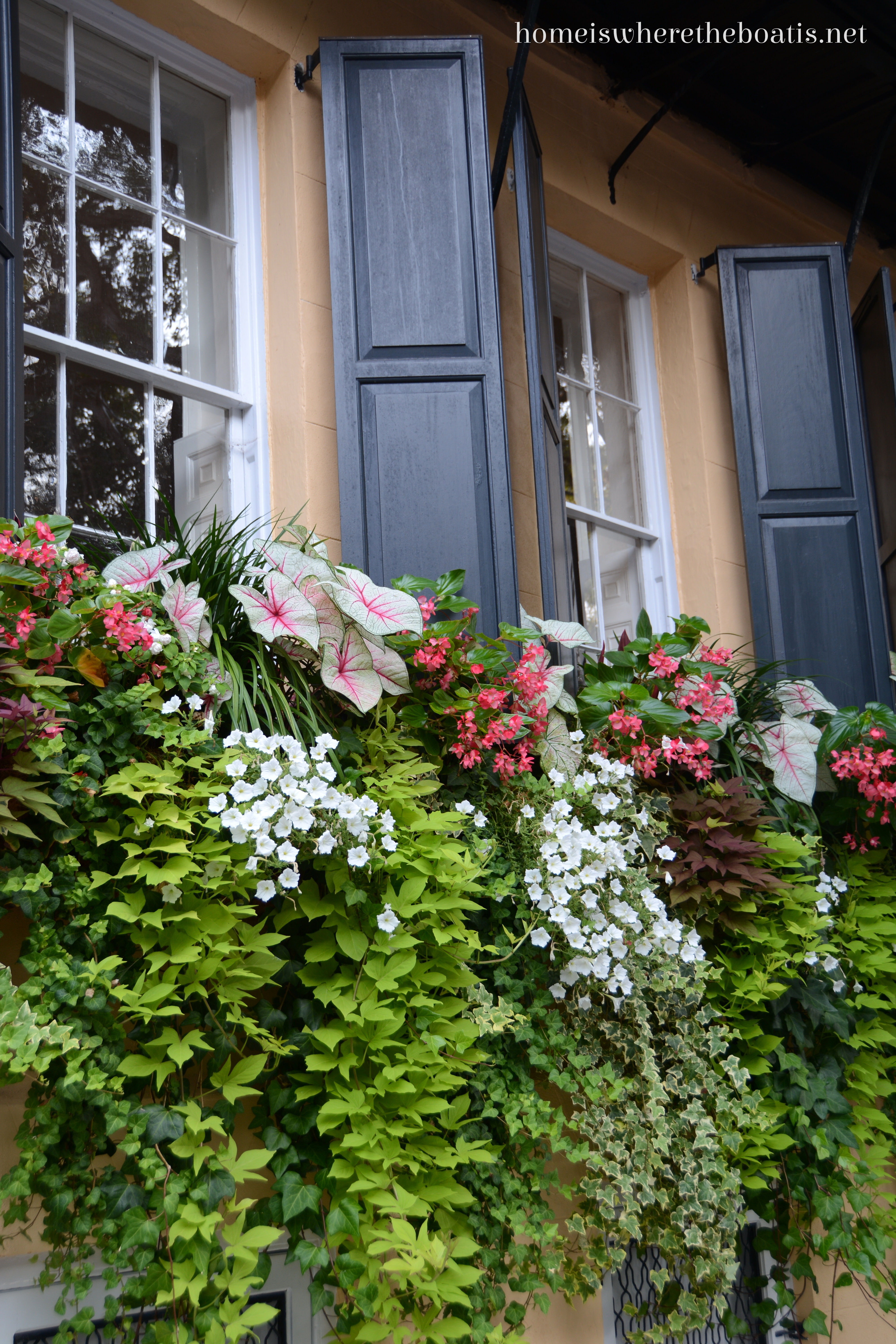 charleston window boxes home is where the boat is. Black Bedroom Furniture Sets. Home Design Ideas