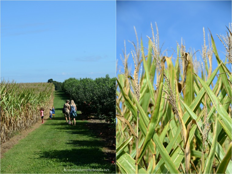 Carrigan Farms, Apple Orchard and Corn