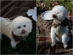 Chloe & Gracie Pumpkin Treats!