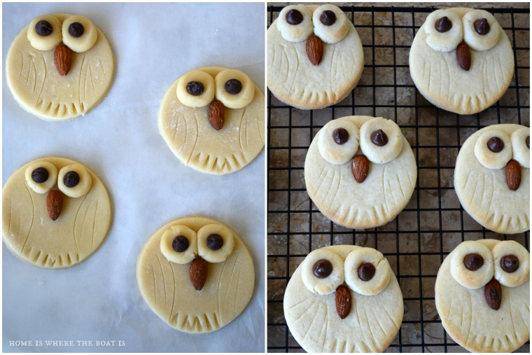 Easy Owl Sugar Cookies