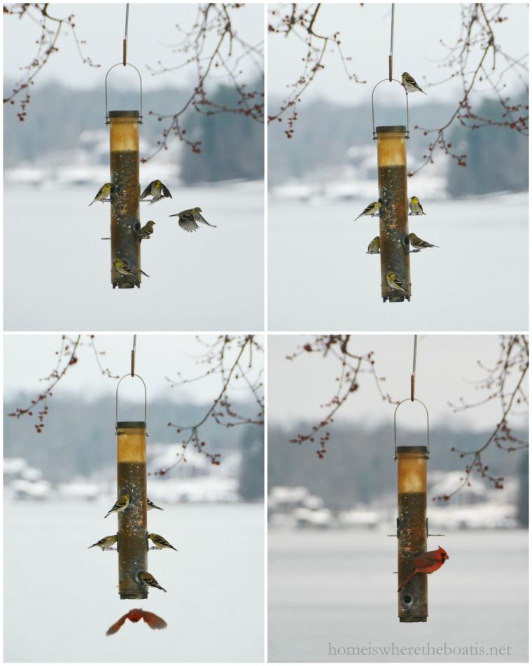 birds at feeder-001