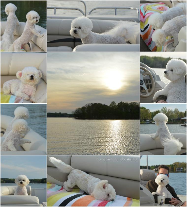 PicMonkey Collage1-001