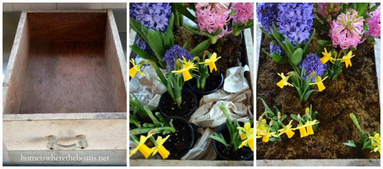 Drawer Planter with spring bulbs