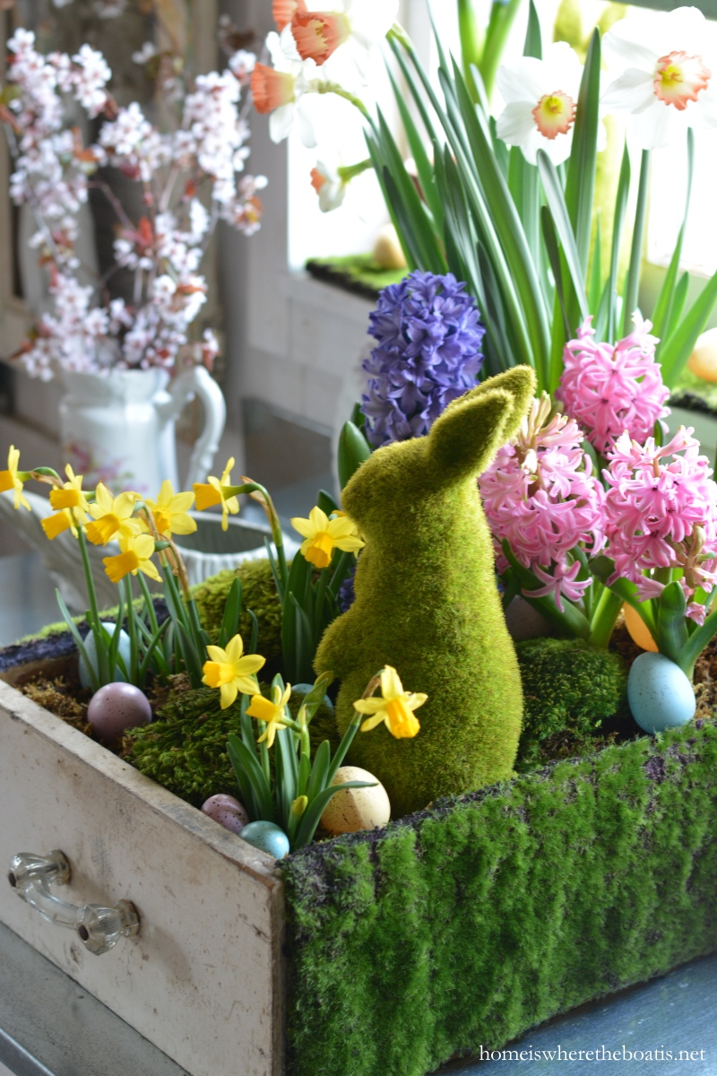 In the potting shed planting spring bulbs in a drawer for Easter garden designs