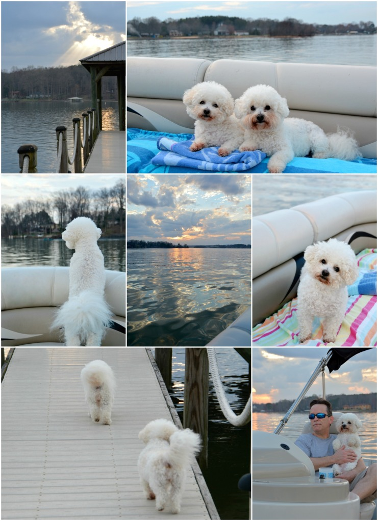 March Boating with Dogs
