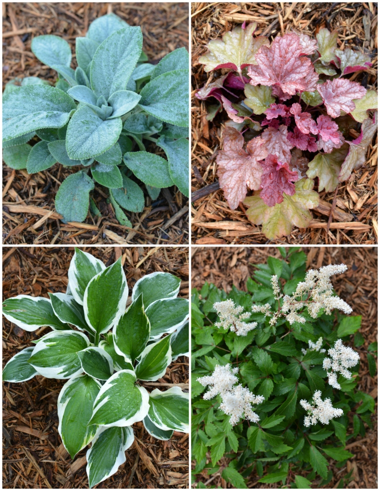 Perennial Bed Plants