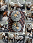 pumpkin-dog-treats-halloween