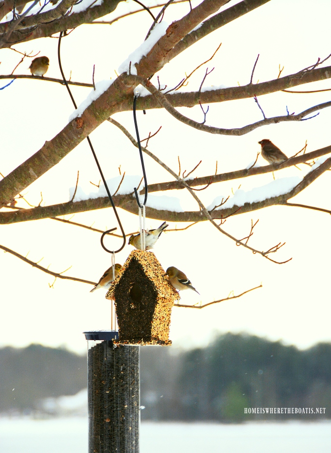 Goldfinches at birdfeeder   ©homeiswheretheboatis.net
