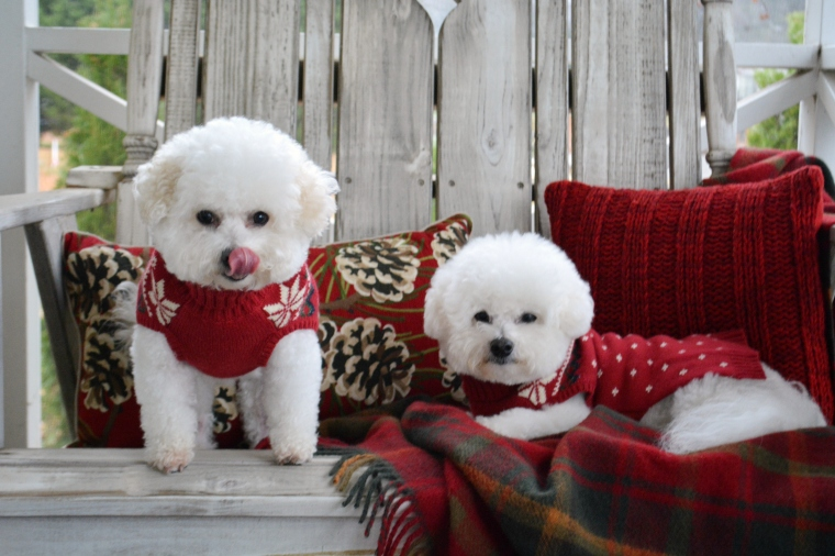 chloe and gracie are stopping by to wish you a merry christmas