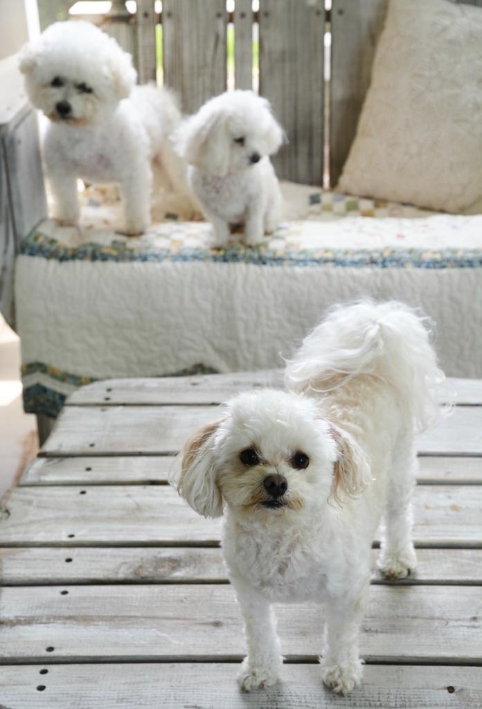 Love Maddie Dog Treats