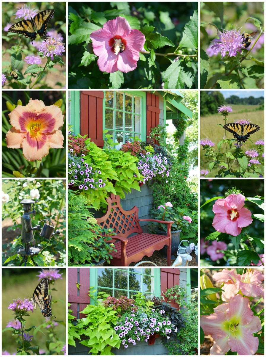 Bees, Butterflies and Blooms Around the Potting Shed