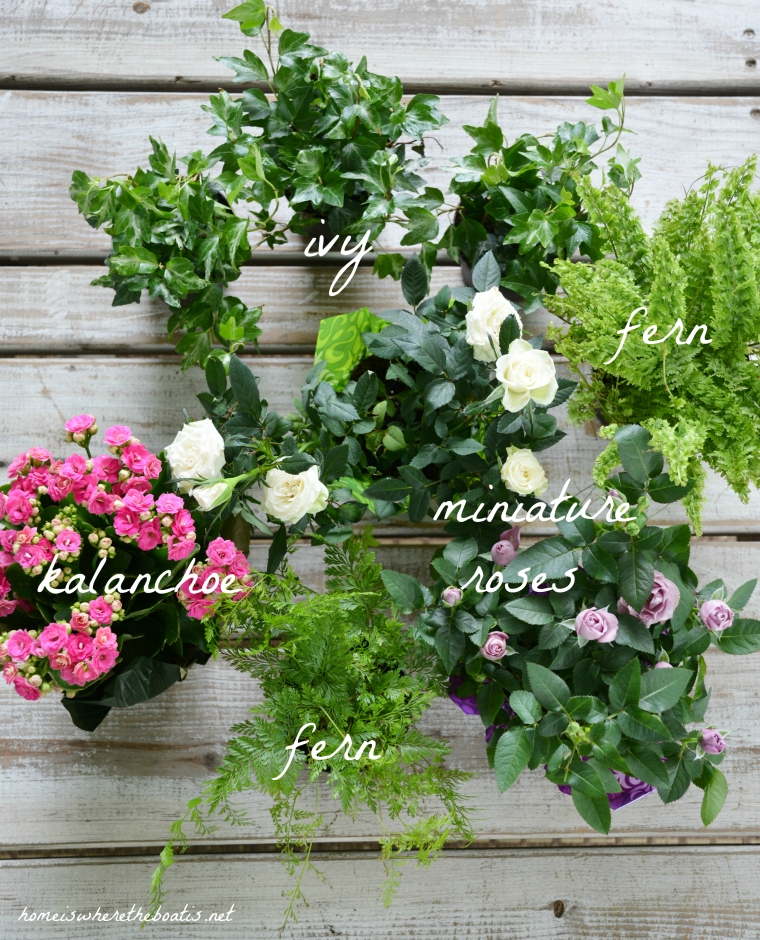Mother S Day Container Garden Ideas: Floral Friday: DIY Indoor Container Or Dish Garden