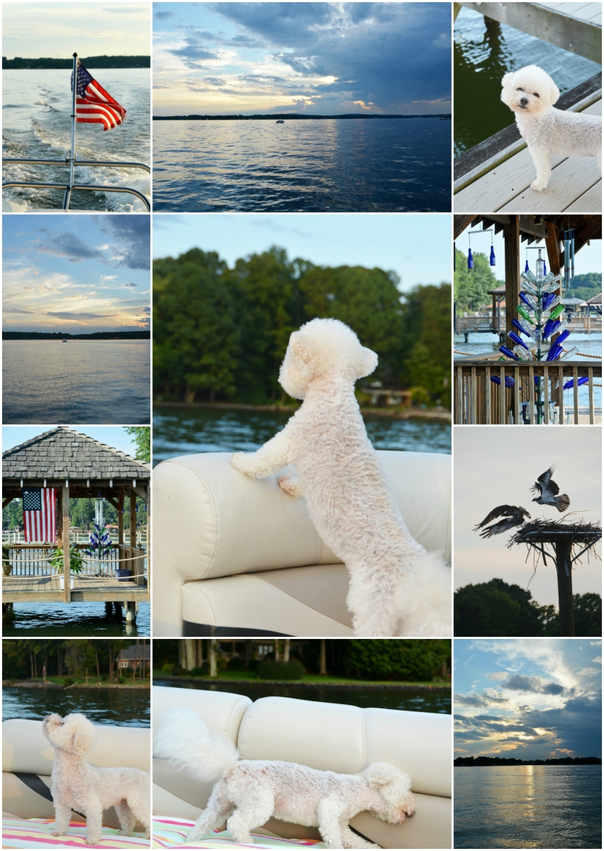 Weekend Waterview: #DogsLoveBoating, Boat Names and Bottle Tree