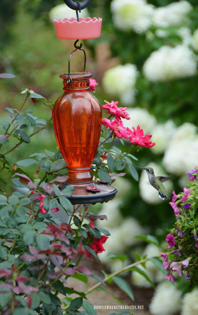 Hummingbird at feeder | ©homeiswheretheboatis.net #garden #flowers