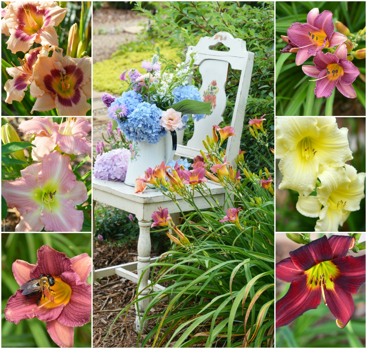 Fall Planting for Summer Blooms: Daylilies + Giveaway