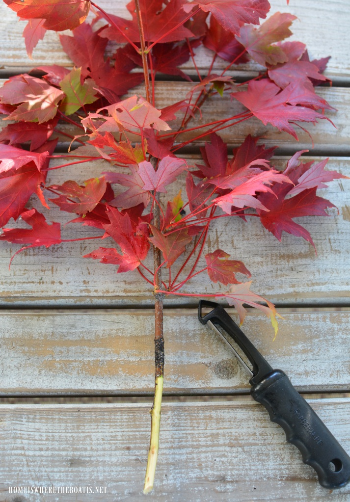 Tip for woody stems for flower arrangements! | ©homeiswheretheboatis.net #flowerarranging #fall #autumn #leaves
