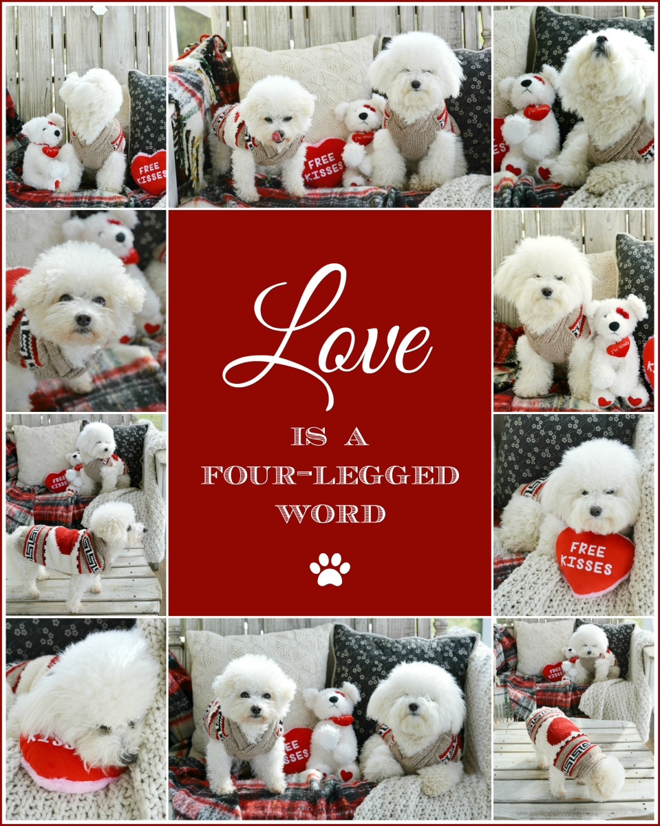 Love is a Four-Legged Word