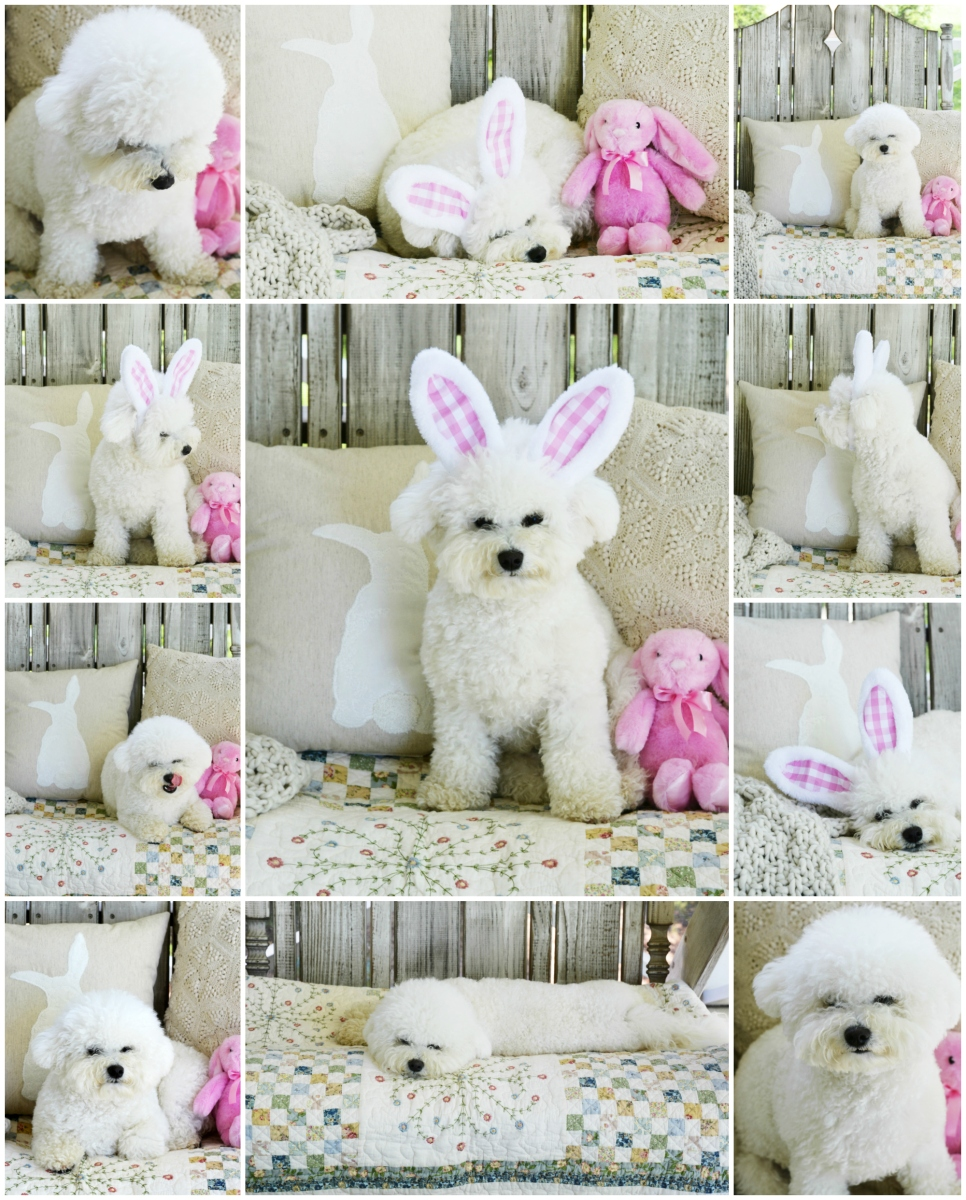 Happy Easter from Lola 🐾