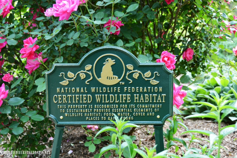 Certify your garden as a Wildlife Habitat to attract birds, butterflies, and other neighborhood wildlife. It's fun, makes a positive difference and easier than you might think. | ©homeiswheretheboatis.net #garden #flowers