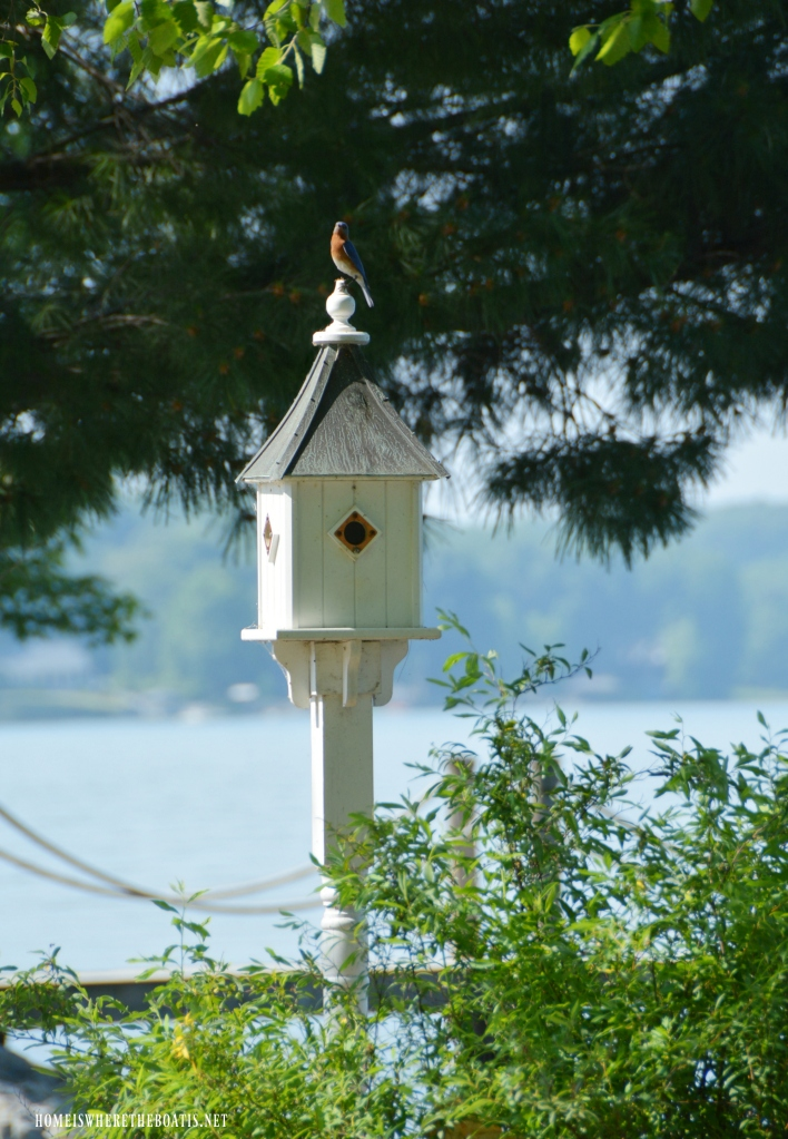 Eastern Bluebird on birdhouse | ©homeiswheretheboatis.net #bird #nests #birdhouses