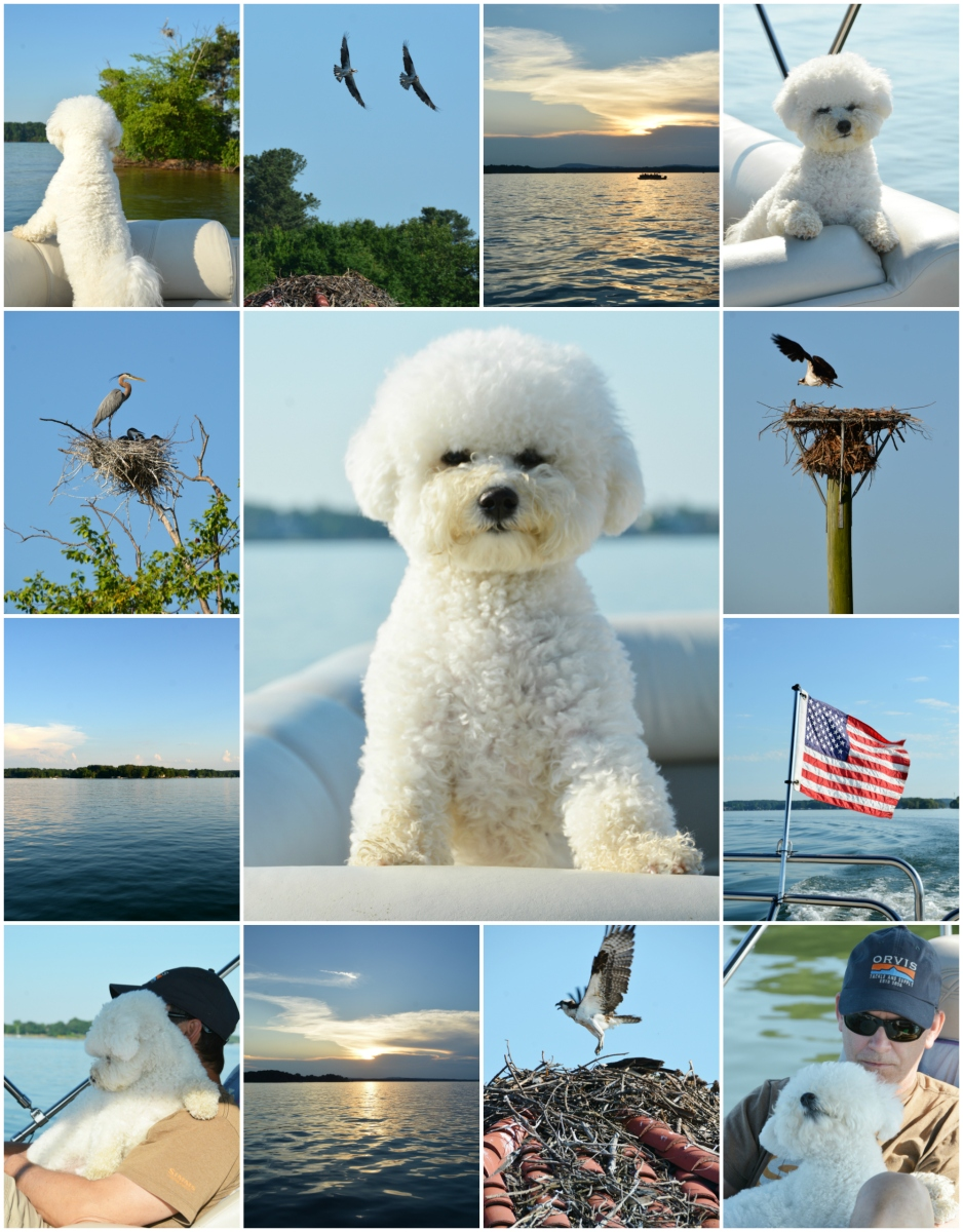 Weekend Waterview: Pontoon Ride for Lola + Osprey and Herons Nesting