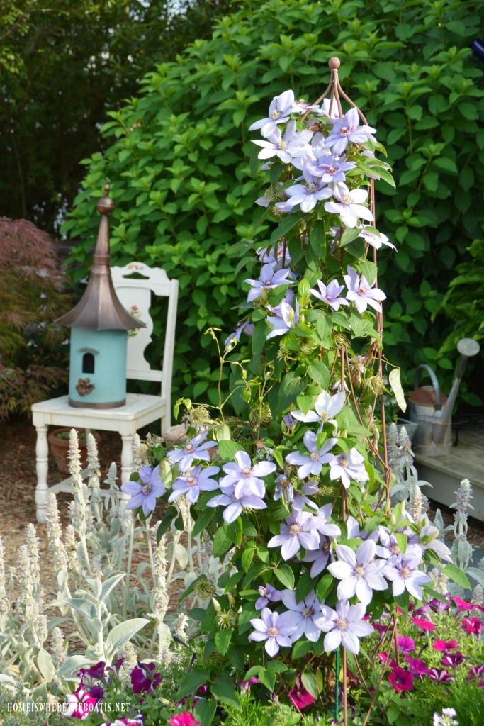 Clematis on trellis | ©homeiswheretheboatis.net #garden #spring #flowers