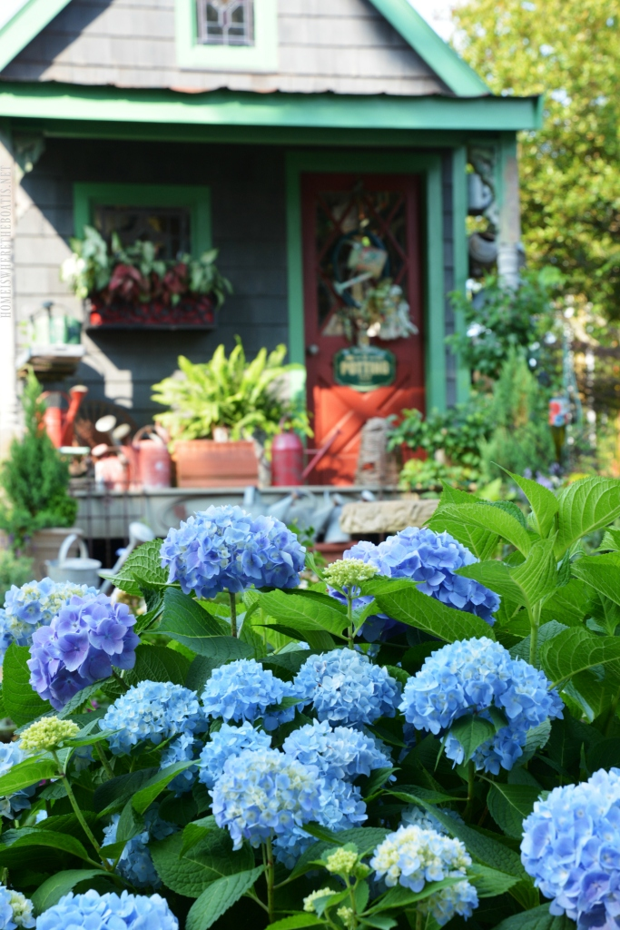 Spring Flowers Around the Potting Shed | ©homeiswheretheboatis.net #garden #flowers #spring #hydrangeas