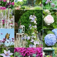 Summer Heat and Spring Flowers Around the Potting Shed