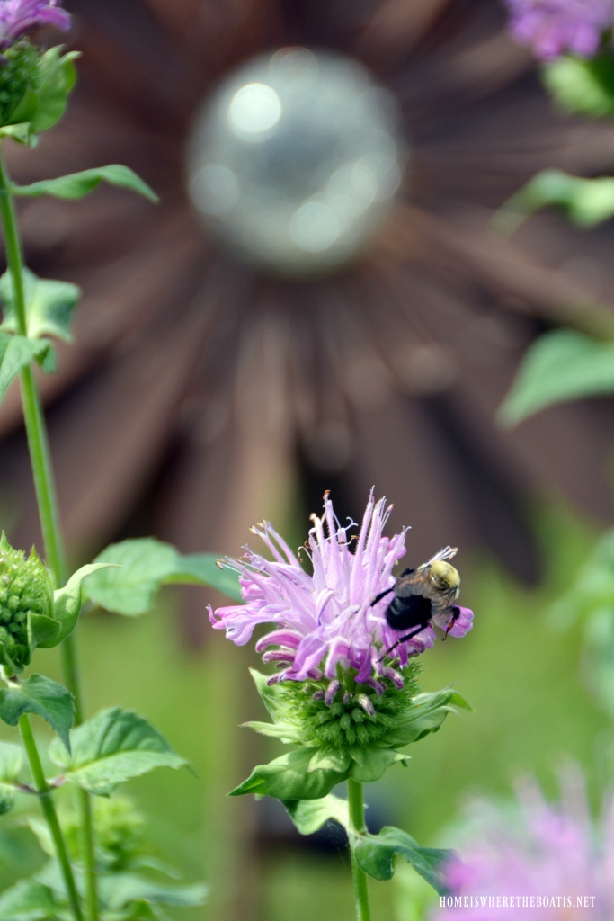 Bumblebee on bee balm | ©homeiswheretheboatis.net #summer #garden #flowers #bees