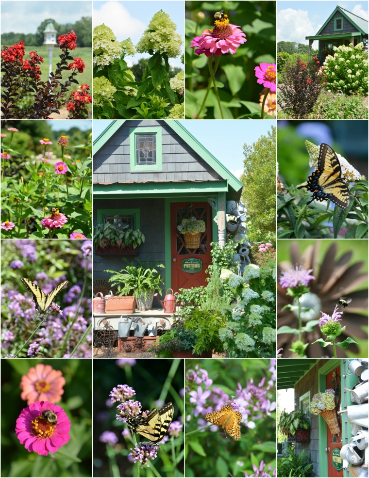 Flowers Around the Potting Shed and July Garden Update | ©homeiswheretheboatis.net #summer #garden #flowers #gardenshed #bees #hydrangeas #butterflies