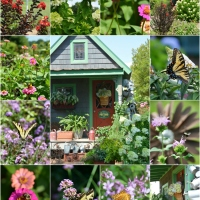 Flowers Around the Potting Shed + July Garden Update