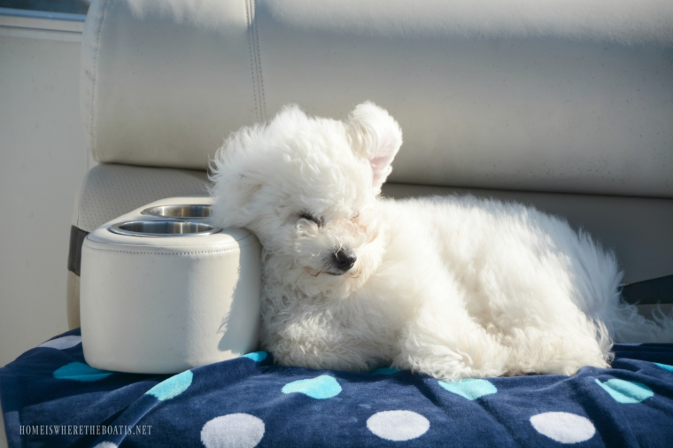 Weekend Waterview Boating with Dogs | ©homeiswheretheboatis.net #LKN #boatingwithdogs #pontoon #BichonFrise