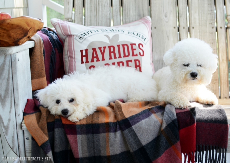 Lola and Sophie on the Porch | ©homeiswheretheboatis.net #fall #porch #apples #bichonfrise