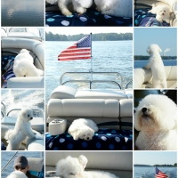 Weekend Waterview: A Teaser of Fall and Boating with Dogs