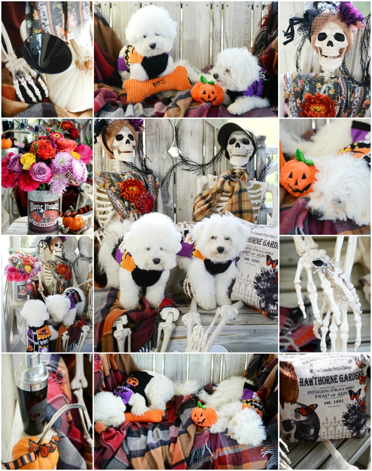 Skeletons and Pups on the Porch | ©homeiswheretheboatis.net #Halloween #skeleton #porch #dogs #bichonfrise #humerus