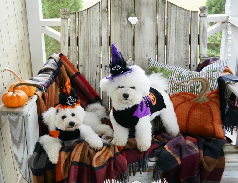 Lola and Sophie Halloween | ©homeiswheretheboatis.net #dogs #halloween #bichonfrise