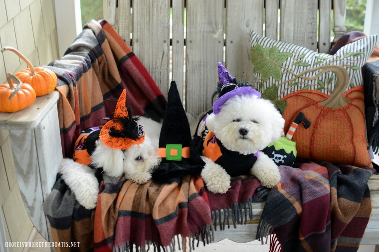 Lola and Sophie Halloween | ©homeiswheretheboatis.net #dogs #halloween #bichonfrise