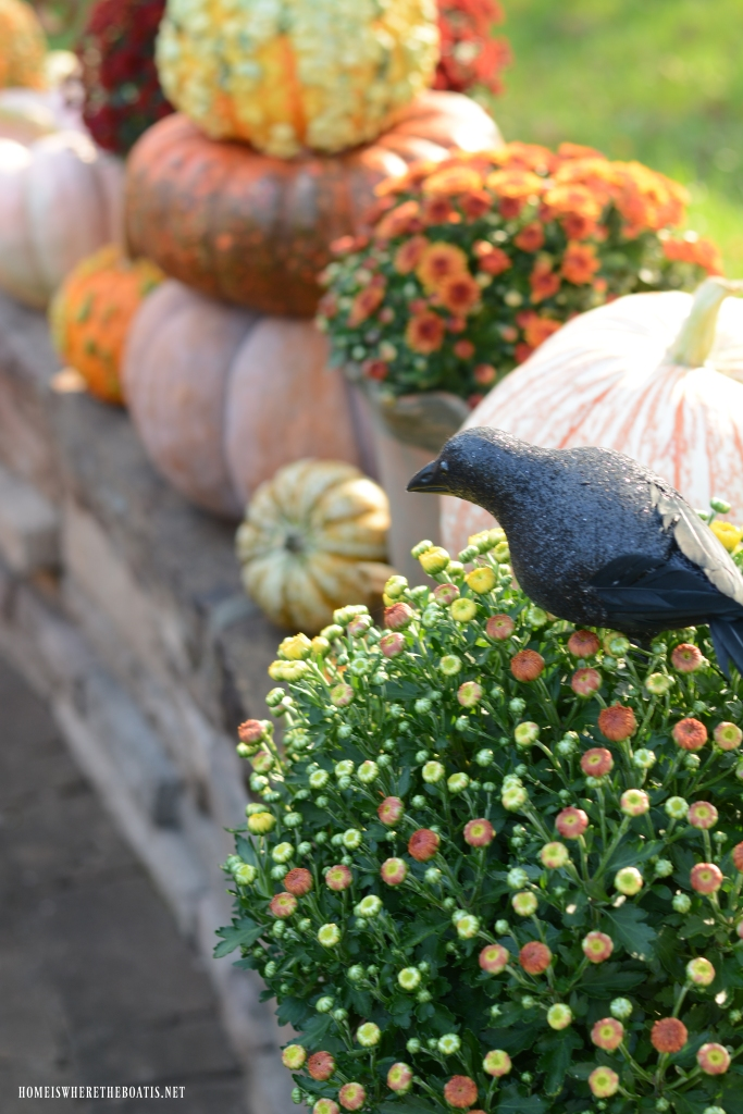 Pumpkins and mums with crow | ©homeiswheretheboatis.net #halloween #tablescapes