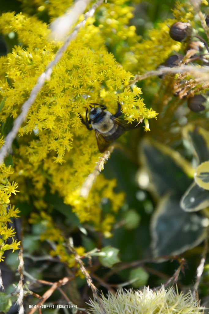 Bee on goldenrod | ©homeiswheretheboatis.net #fall #arrangement #bee
